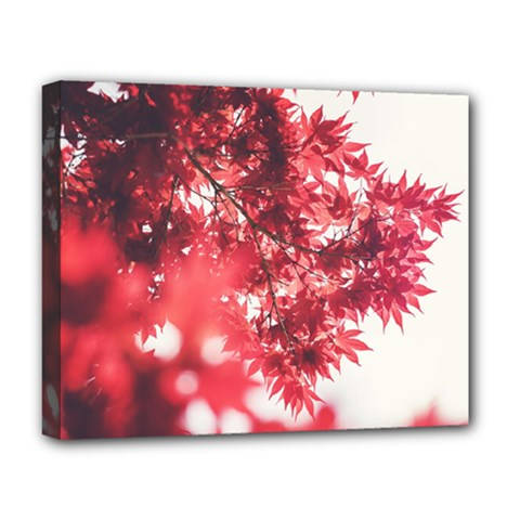 Maple Leaves Red Autumn Fall Deluxe Canvas 20  X 16   by Onesevenart