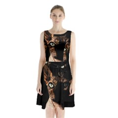Sphynx Cat Sleeveless Chiffon Waist Tie Dress by Valentinaart