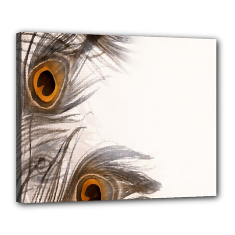 Peacock Feathery Background Canvas 20  X 16  by Simbadda