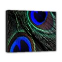 Peacock Feather Canvas 10  x 8  View1