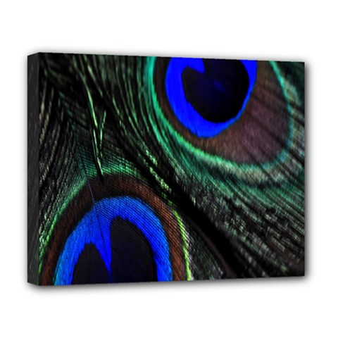 Peacock Feather Deluxe Canvas 20  X 16   by Simbadda