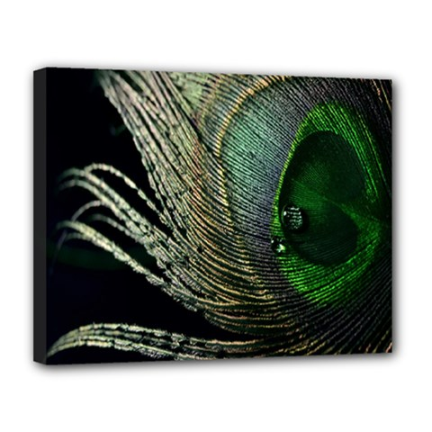 Feather Peacock Drops Green Canvas 14  X 11  by Simbadda