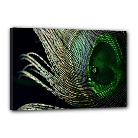 Feather Peacock Drops Green Canvas 18  X 12  by Simbadda