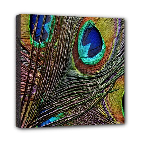 Peacock Feathers Mini Canvas 8  X 8  by Simbadda