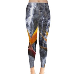 Bird Of Paradise Leggings  by carlg