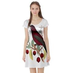 Bird On Branch Illustration Short Sleeve Skater Dress
