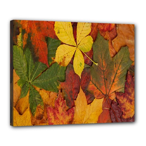 Colorful Autumn Leaves Leaf Background Canvas 20  X 16  by Amaryn4rt