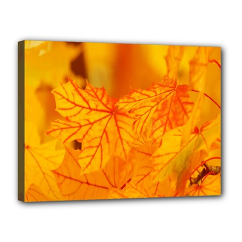 Bright Yellow Autumn Leaves Canvas 16  X 12