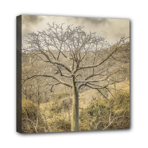 Ceiba Tree At Dry Forest Guayas District   Ecuador Mini Canvas 8  X 8  by dflcprints