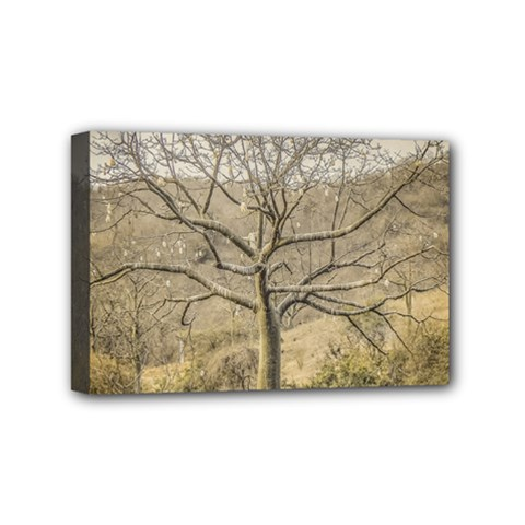 Ceiba Tree At Dry Forest Guayas District   Ecuador Mini Canvas 6  X 4  by dflcprints