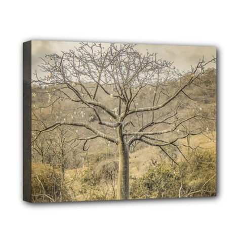 Ceiba Tree At Dry Forest Guayas District   Ecuador Canvas 10  X 8  by dflcprints