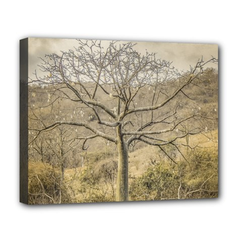 Ceiba Tree At Dry Forest Guayas District   Ecuador Deluxe Canvas 20  X 16   by dflcprints