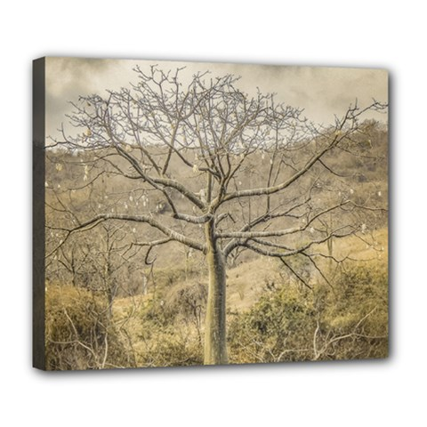 Ceiba Tree At Dry Forest Guayas District   Ecuador Deluxe Canvas 24  X 20   by dflcprints