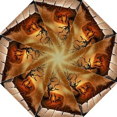 Digital Art Nature Spider Witch Spiderwebs Bricks Window Trees Fire Boiler Cliff Rock Folding Umbrellas by Simbadda