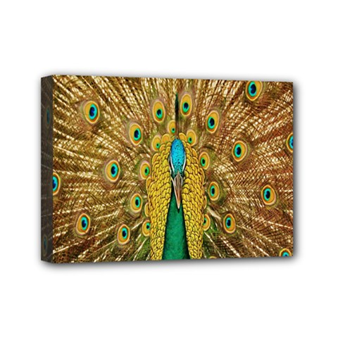 Peacock Bird Feathers Mini Canvas 7  X 5  by Simbadda