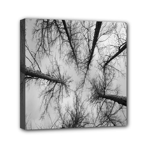 Trees Without Leaves Mini Canvas 6  X 6  by Nexatart