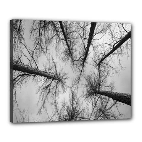 Trees Without Leaves Canvas 20  X 16  by Nexatart