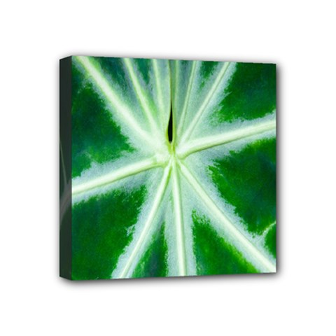 Green Leaf Macro Detail Mini Canvas 4  X 4  by Nexatart