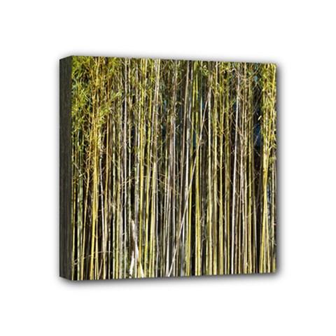 Bamboo Trees Background Mini Canvas 4  X 4