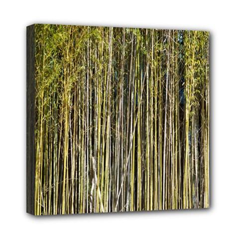 Bamboo Trees Background Mini Canvas 8  X 8  by Nexatart