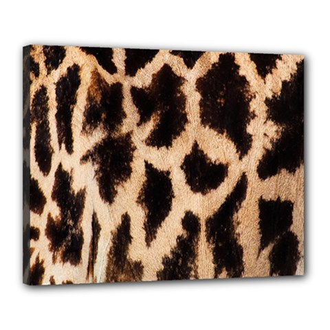 Giraffe Texture Yellow And Brown Spots On Giraffe Skin Canvas 20  X 16  by Nexatart