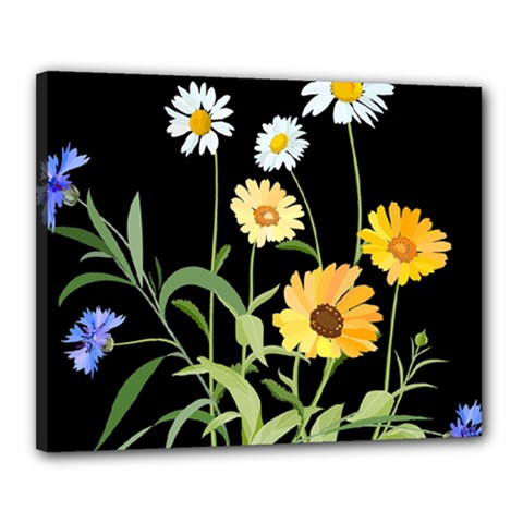 Flowers Of The Field Canvas 20  X 16