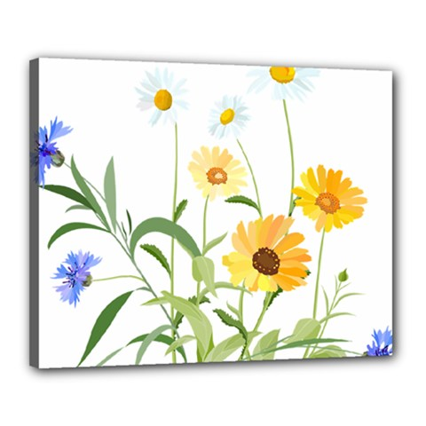 Flowers Flower Of The Field Canvas 20  X 16  by Nexatart