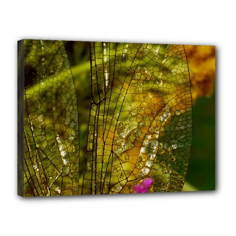 Dragonfly Dragonfly Wing Insect Canvas 16  X 12  by Nexatart