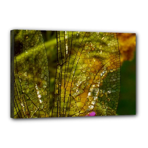 Dragonfly Dragonfly Wing Insect Canvas 18  X 12  by Nexatart