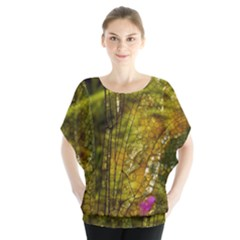 Dragonfly Dragonfly Wing Insect Blouse by Nexatart