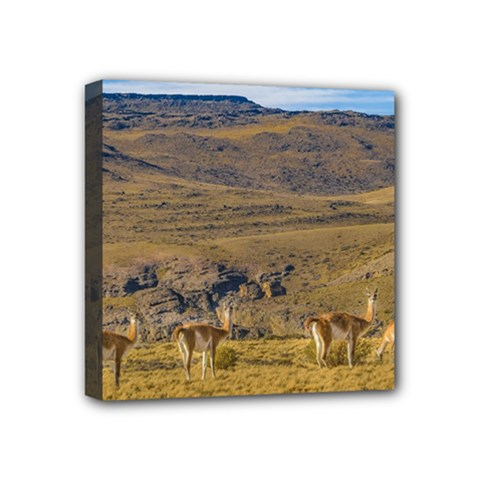 Group Of Vicunas At Patagonian Landscape, Argentina Mini Canvas 4  X 4  by dflcprints