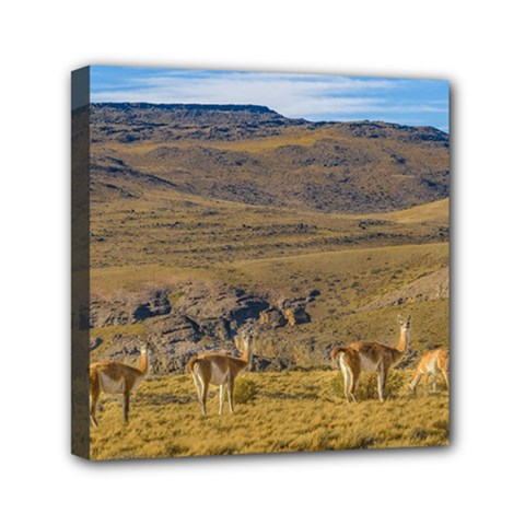 Group Of Vicunas At Patagonian Landscape, Argentina Mini Canvas 6  X 6  by dflcprints