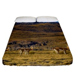 Group Of Vicunas At Patagonian Landscape, Argentina Fitted Sheet (california King Size) by dflcprints