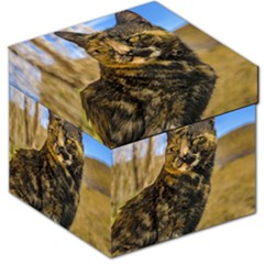 Adult Wild Cat Sitting And Watching Storage Stool 12   by dflcprints