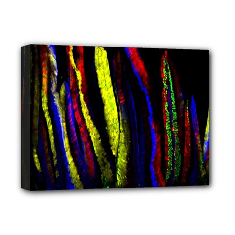 Multicolor Lineage Tracing Confetti Elegantly Illustrates Strength Combining Molecular Genetics Micr Deluxe Canvas 16  X 12   by Mariart