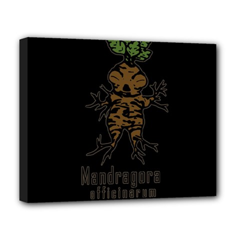 Mandrake Plant Deluxe Canvas 20  X 16   by Valentinaart