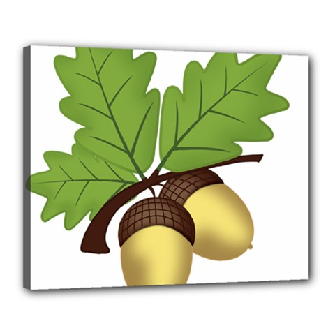 Acorn Hazelnuts Nature Forest Canvas 20  X 16  by Nexatart