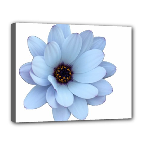 Daisy Flower Floral Plant Summer Canvas 14  X 11  by Nexatart