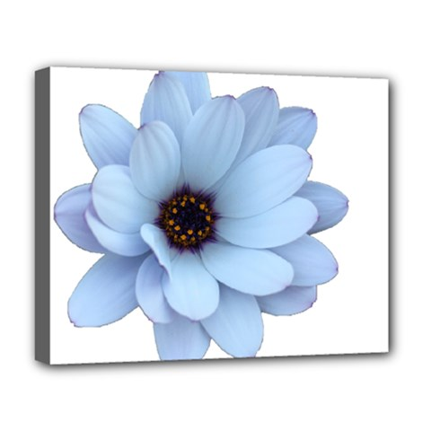 Daisy Flower Floral Plant Summer Deluxe Canvas 20  X 16