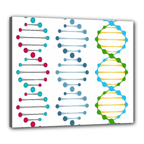 Genetic Dna Blood Flow Cells Canvas 24  X 20  by Mariart