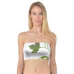 Element Tag Green Nature Bandeau Top