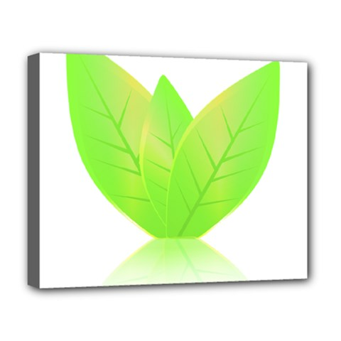 Leaves Green Nature Reflection Deluxe Canvas 20  X 16