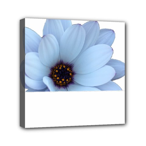 Daisy Flower Floral Plant Summer Mini Canvas 6  X 6  by Nexatart