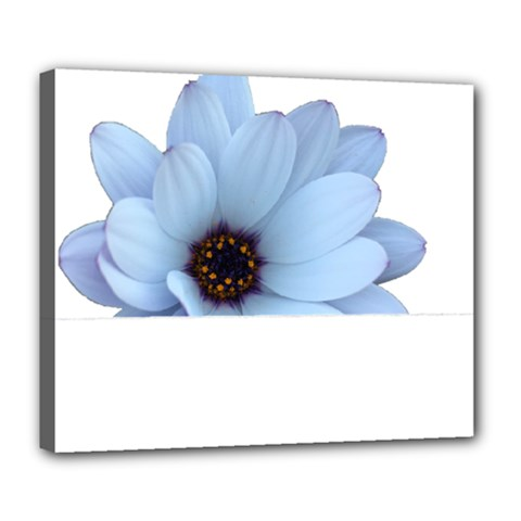Daisy Flower Floral Plant Summer Deluxe Canvas 24  X 20   by Nexatart
