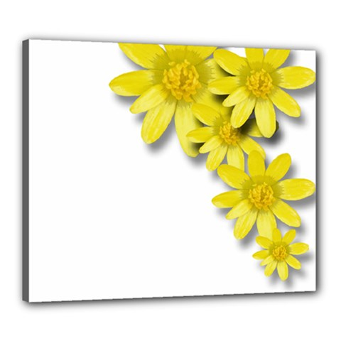 Flowers Spring Yellow Spring Onion Canvas 24  X 20