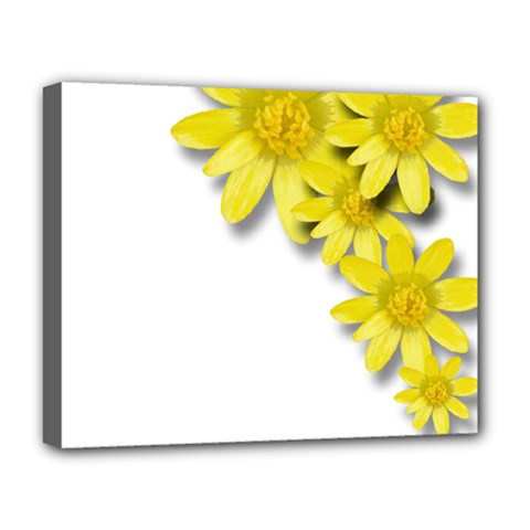 Flowers Spring Yellow Spring Onion Deluxe Canvas 20  X 16