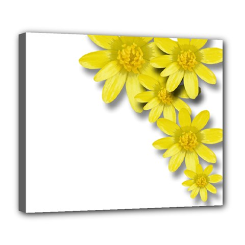 Flowers Spring Yellow Spring Onion Deluxe Canvas 24  X 20   by Nexatart