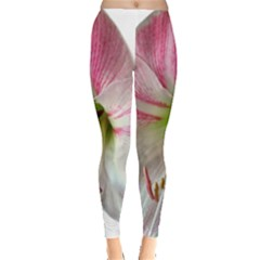 Flower Blossom Bloom Amaryllis Leggings  by Nexatart