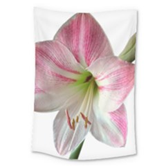 Flower Blossom Bloom Amaryllis Large Tapestry by Nexatart