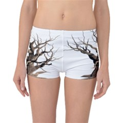 Tree Isolated Dead Plant Weathered Boyleg Bikini Bottoms